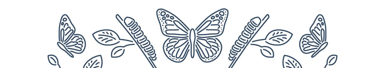 Metamorfosis: de oruga a mariposa